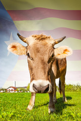 Cow with flag on background series - Catalonia