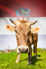 Cow with flag on background series - Croatia