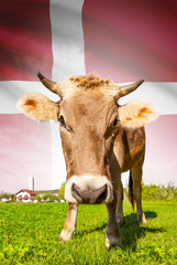 Cow with flag on background series - Denmark