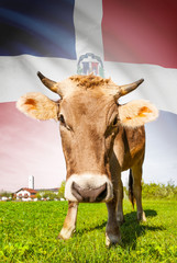 Cow with flag on background series - Dominican Republic