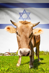 Cow with flag on background series - Israel