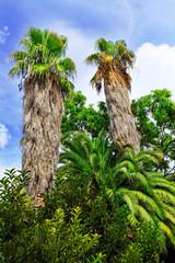 Tropical Park.