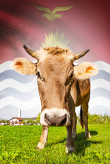Cow with flag on background series - Kiribati