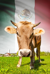Cow with flag on background series - Mexico