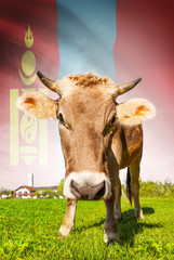 Cow with flag on background series - Mongolia