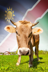 Cow with flag on background series - Namibia