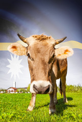 Cow with flag on background series - Nauru