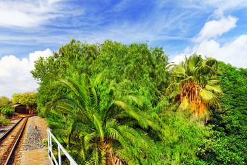 Beautiful landscape of humid tropical jungle.