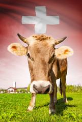Cow with flag on background series - Switzerland