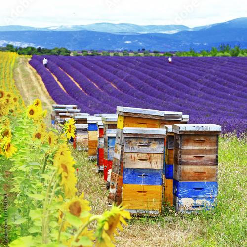 Leinwanddruck Bild lavander fields and beehive in Provence, France
