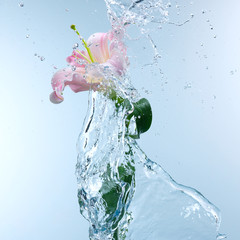 Pink day lily in cool splashing water