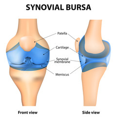 Synovial bursa