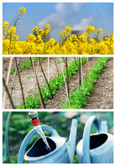 collage mix of  farming and gardening in countryside