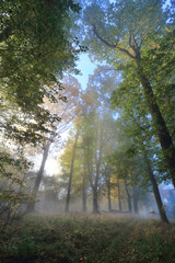 Foggy magical autumn Forest with colorful Trees
