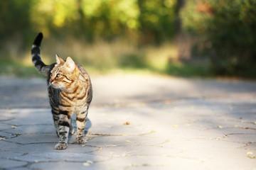 Cat walking outdoors
