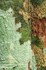 Lichens on tree trunk texture background