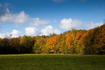Cape Croker Woodside Autumn Fall Forest Trees