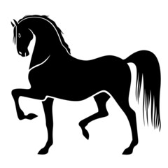 Silhouette of proud horse