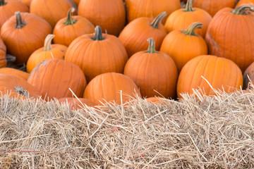 Pumpkin Blur Background
