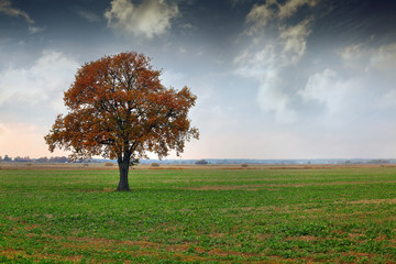 tree on a meadow