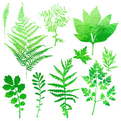Set of garden watercolor leaves. Vector illustration.