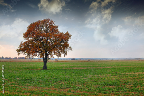 canvas print picture tree on a meadow