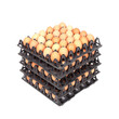 stack of eggs in tray on white - 71577900