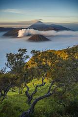 브로모화산