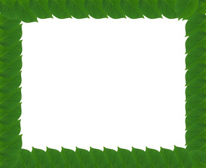 Green square frame from leaves