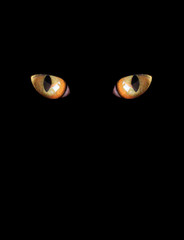 eyes of cat on the black background