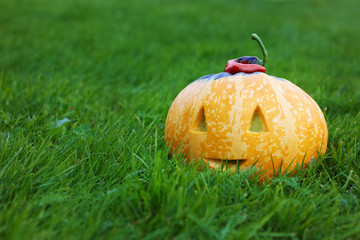 halloween funny pumpkin with a smile in autumn green grass