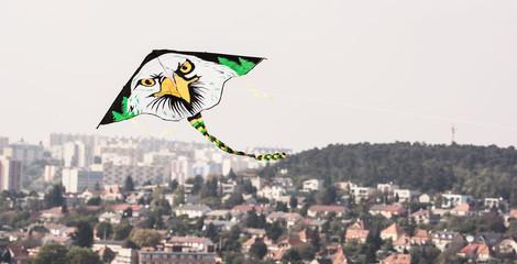 Kite flying - Bald eagle