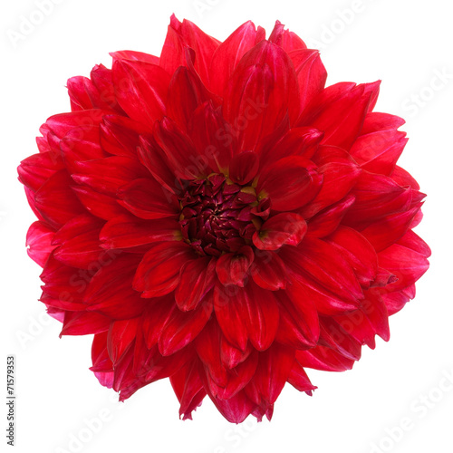 Close-up of dahlia