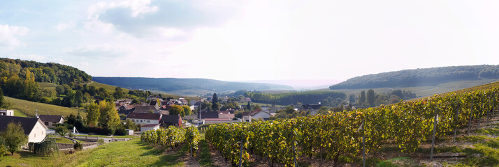 Panorama of vineyard