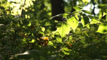 Blätterzweig im Wind