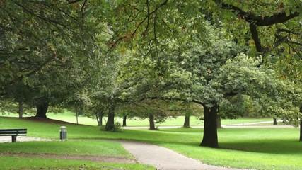 Bäume im Freizeitpark