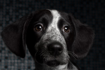 close-up portrait black dog