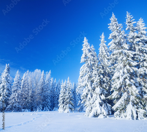 canvas print picture Snow field
