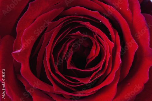 canvas print picture Rote Rose, Edelrose, Nahaufnahme, Detail