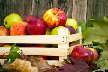 freshly picked apples