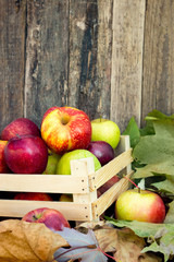 Healthy organic apples