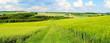 Leinwanddruck Bild - grüne Frühlingslandschaft Panorama