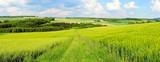 grüne Frühlingslandschaft Panorama