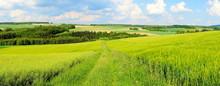 "Постер, картина, фотообои ""grüne Frühlingslandschaft Panorama"""