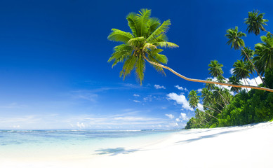 Tropical Beach and Blue Sky Destination