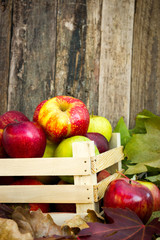 picked apples in a wooden crate