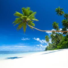 Tropical Beach and Blue Sky Destination Scene
