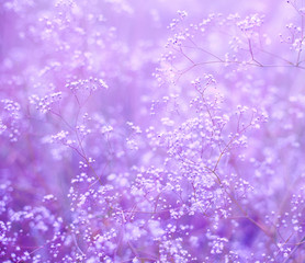 Flowers purple background