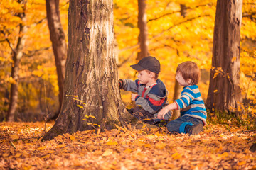 playful boys at fall forest tree