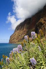 flowers at cape girao,madeira